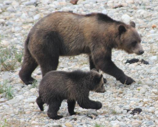 Mother Grizzy Bear