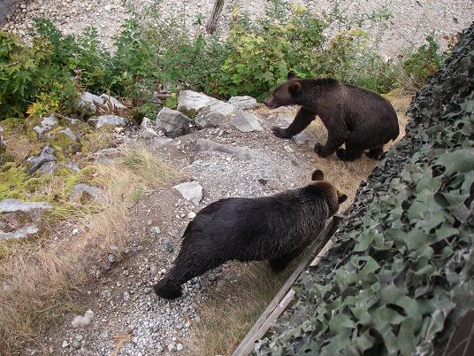 Grizzly Bears Beneath stands
