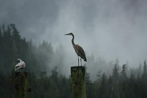Bluse Heron