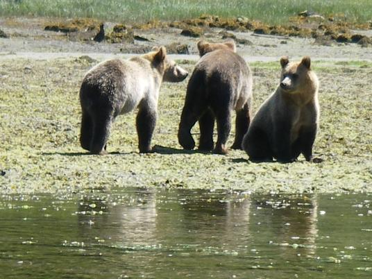 Grizzlies Waiting