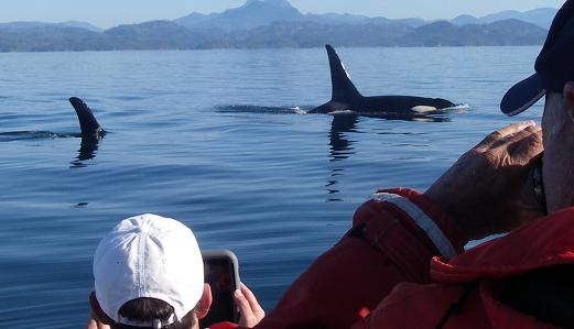 orca  with guests