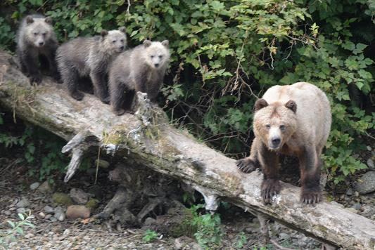 triplets on log