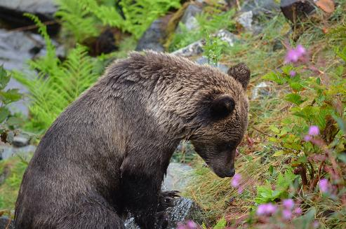 Grizzly Smelling Flowers