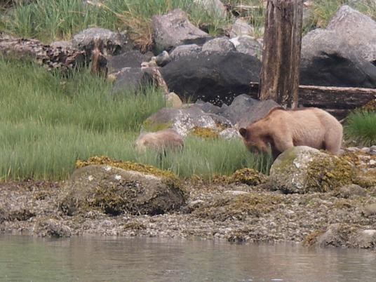 Grizzly mother