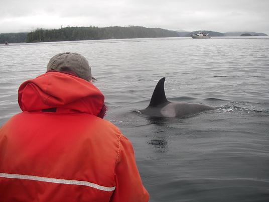 orca visit