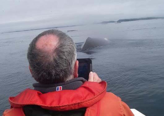 Whale stern