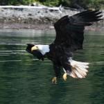 eagles-02