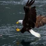 eagles-04