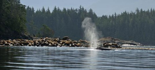 wildlife on whale watching safari