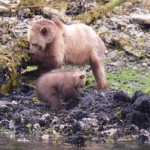 mother grizzly and cub