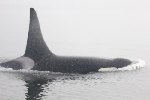 whale watching foggy morning