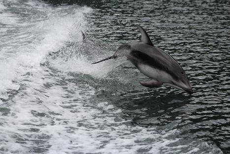 dolphin-propwash