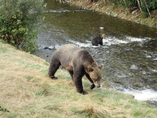 grizzly passing